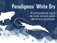 PARADIGMOX WHITE DRY